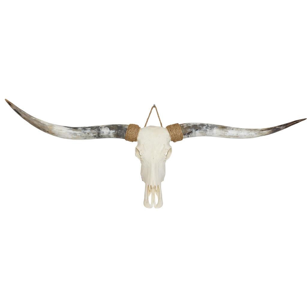 Longhorn schedel hip en modieus