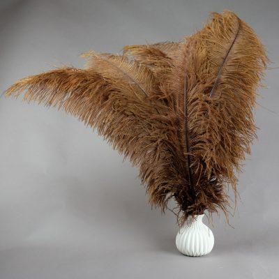 Bruine struisvogelveren   decoratieve veren   decoratie veren