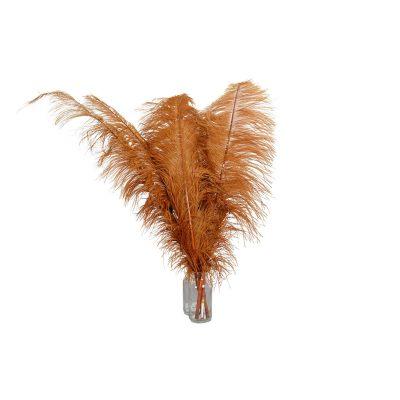 struisvogelveren bruin