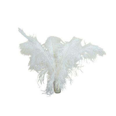 Struisvogelveren wit