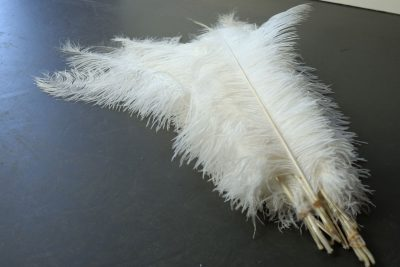 Struisvogelveren wit   decoratie veren wit