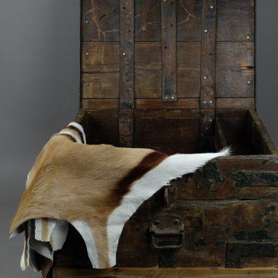 Springbokhuid in houten kist