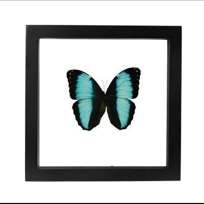 decoratieve vlinder in lijst