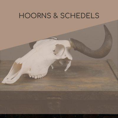 Hoorns & schedels